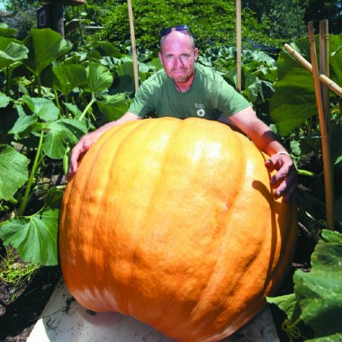 20pcs-super-large-pumpkin-bonsai-vegetable-non-gmo-edible-diy-home-garden-bonsai-giant-pumpkin-bonsai.jpg_640x640