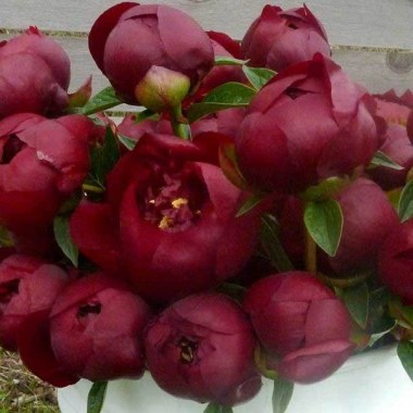 chocolate-peonies